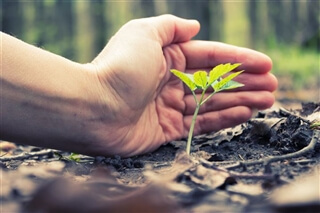 Markas supports national reforestation projects